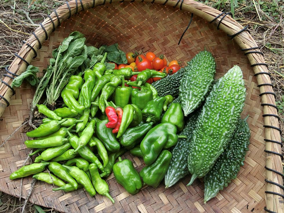 みんな畑 収穫野菜